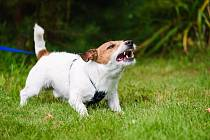 Rozbor střevní mikroflóry může pomoci včas odhalit taková zvířata, která sklony k agresivitě mají.