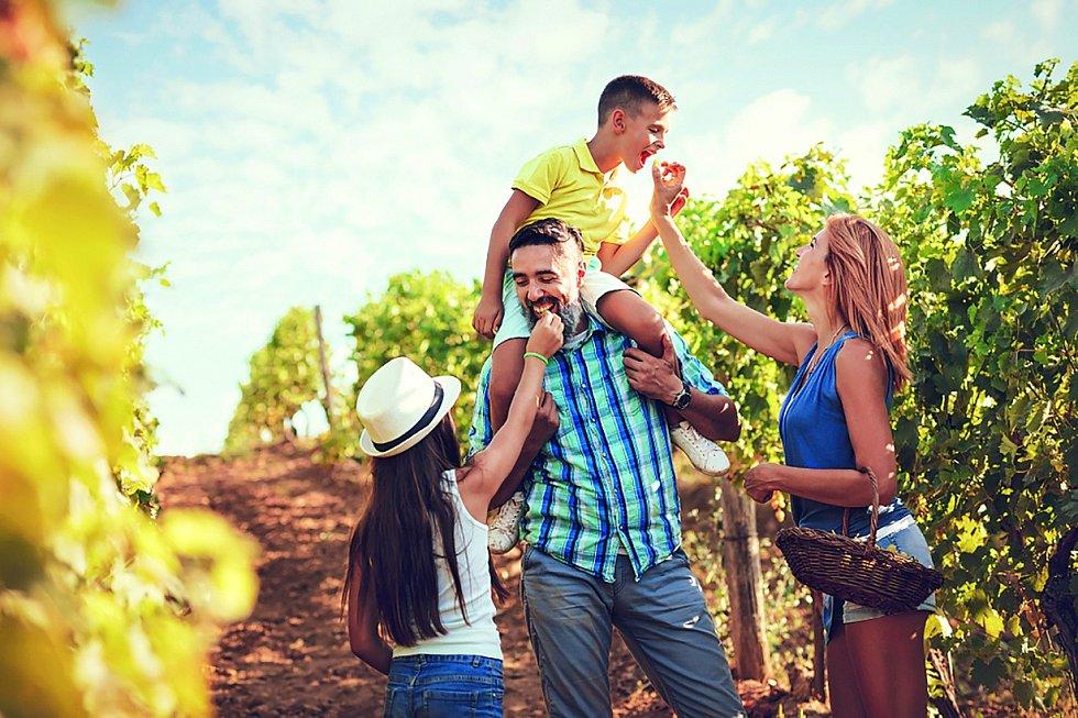 Vinařské stezky se těší velké popularitě
