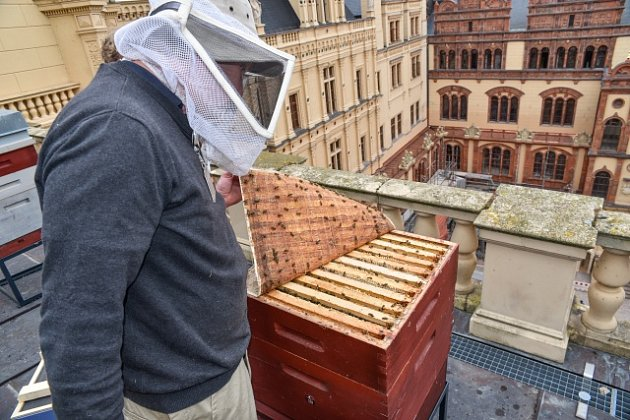 Úlů na střechách ve městech přibývá.