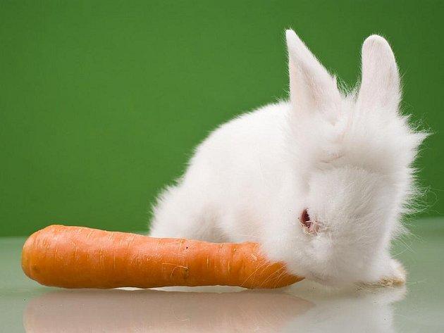 Zakrslý králík. Ilustrační foto