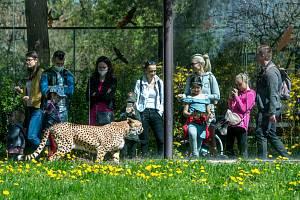 Návštěvníci zoo ve Dvoře Králové