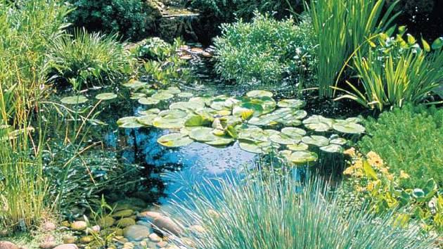 Takto se odvděčí na zahradě citlivě umístěné a pečlivě ošetřované jezírko.