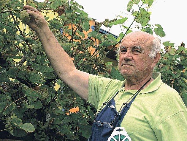 JIHOČESKÝ VINAŘ. František Heriban ukazuje jeden z osmnácti druhů evropských vín, které v současnosti pěstuje u svého domku v Českých Budějovicích.