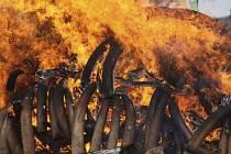 Kolem 120 tun slonoviny plánuje letos v dubnu spálit během konání konference o ochraně afrických slonů keňská vláda.