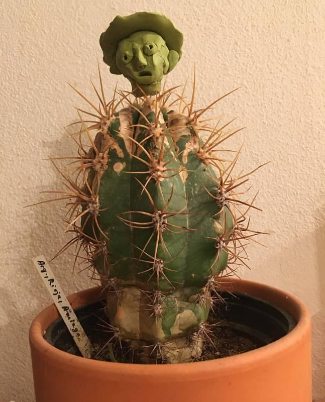 Včera jsem si stěžovala, že mi ty kaktusy nekvetou...