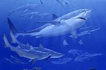 Carcharocles angustidens byl jedním z velkých žraloků, kteří se proháněli v oligocénním moři před třemi desítkami milionů let