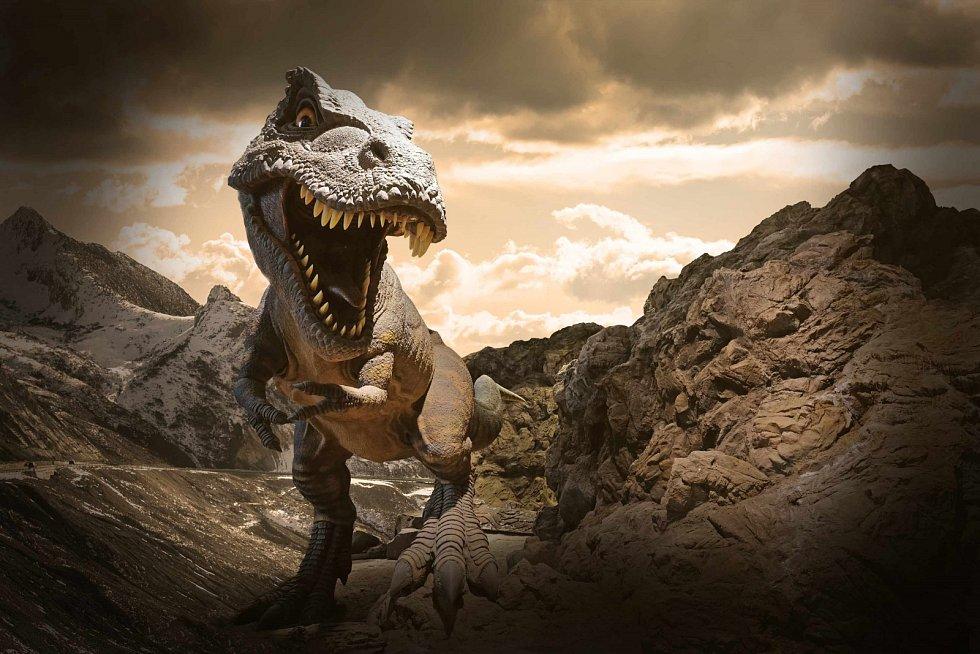Největší tyranosauři mohli podle odhadů dosahovat délky kolem 13 metrů a hmotnosti přes 8 tun (nejvyšší odhad je dokonce přes 10 tun