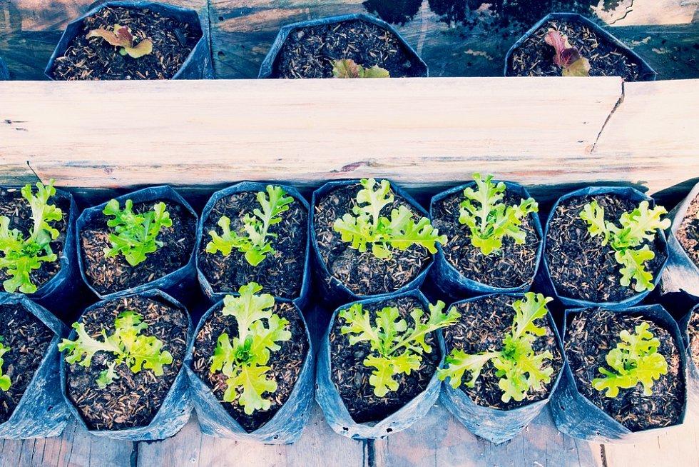 Šikovné jsou velké pěstební pytle. Pozor, obzvlášť tmavé plastové pytle mají někdy tendenci se v parném létě přehřívat.