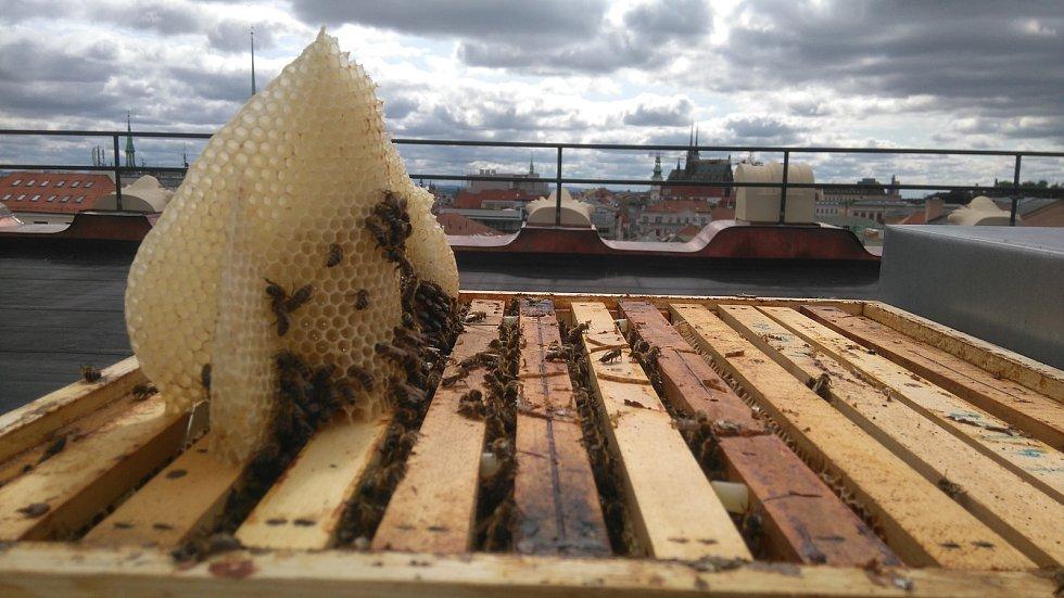 Včelstva na střeše budovy Krajského úřadu Jihomoravského kraje přežila dlouhou zimu.