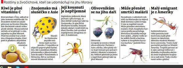 Rostliny a živočichové, kteří se udomácňují na jihu Moravy
