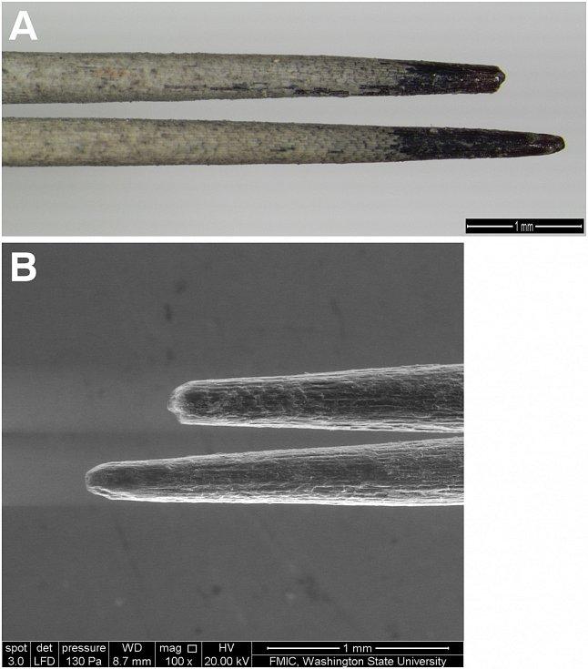 Detail tetovacího nástroje z vědecké práce Andrew Gillreatha‑Browna