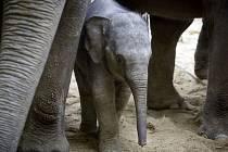 V pražské zoologické zahradě se 30. března veřejnosti slavnostně otevřel nový pavilon slonů. Mládě slůněte bylo pojmenováno Sita.