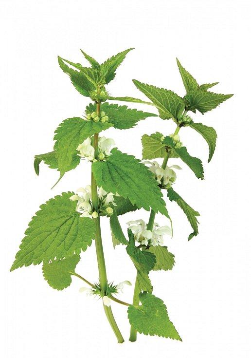 Květy sbíráme od jara do konce léta, celá nať se používá pouze vkoupelích.