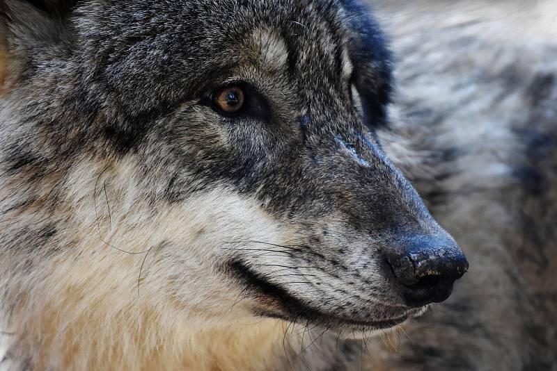 Další lovecká sezona je ve Wisconsinu zatím plánována na začátek listopadu.