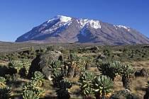 Expedice zahraje na Kilimandžáru kriket pro charitativní účely.