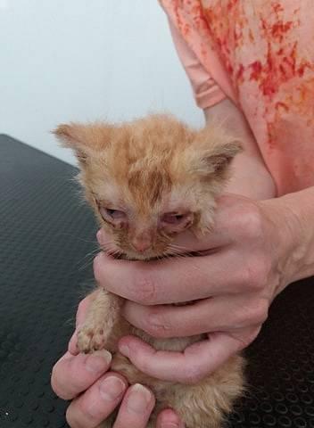 Není to moje kočička, tahle je ze záchranné stanice Fousek z.s., kde se dobrovolně a po své práci starají o kočičky které někteří z nás prostě vyhodí na ulici, týrají a nechají trápit někde pohozené.