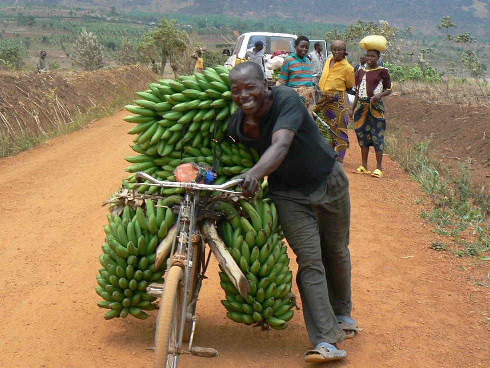 Banány, ilustrační foto.
