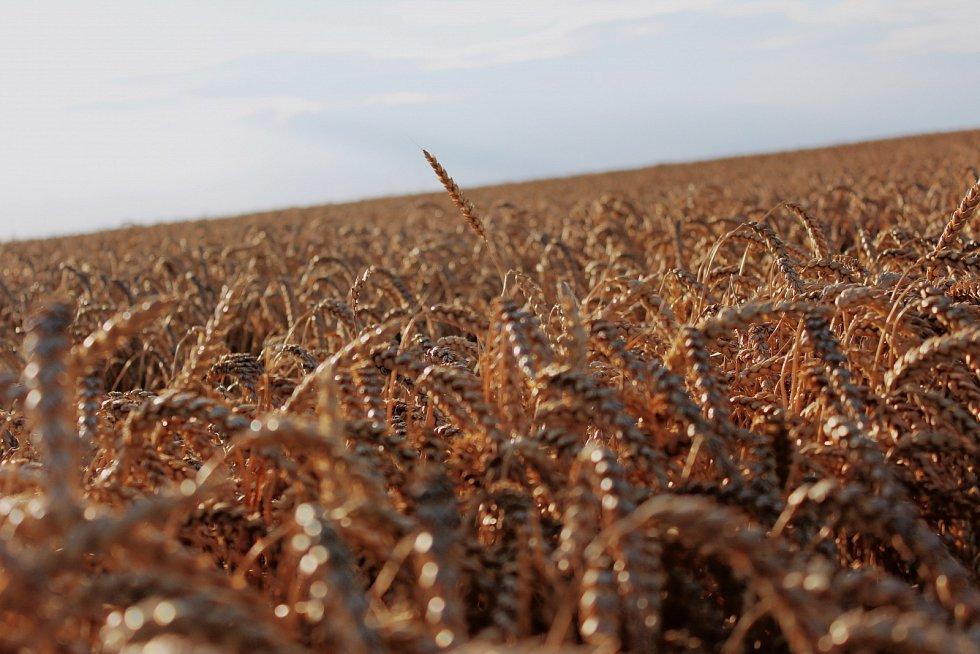 Zdrojem lepku jsou obiloviny jako pšenice, ječmen či žito.