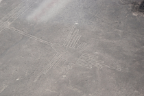 Zobrazují obrazce Nazca exotické ptáky?