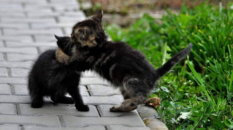 Hrající si koťata jsou vděčným tématem pro focení.
