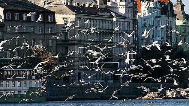 Smetanovo nábřeží v úterý 3. ledna