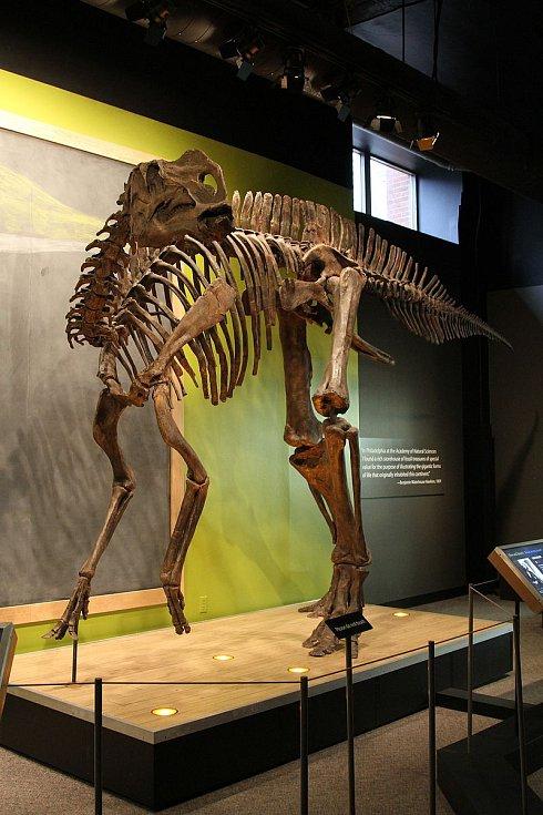 Kostra hadrosaura v Akademii přírodních věd Drexelovy univerzity