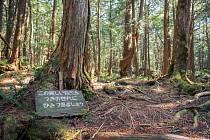 Japonský les sebevrahů Aokigahara