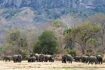 Sloni v mosambickém parku Niassa