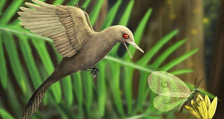 Přestože nedosahoval ani velikosti kolibříka, byl podle vědců nejmenší zaznamenaný dinosaurus lovcem a živil se zejména hmyzem