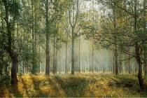 Les blahodárně působí na všechny naše smysly