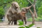 V Thajsku do poprav zapojovali i slony