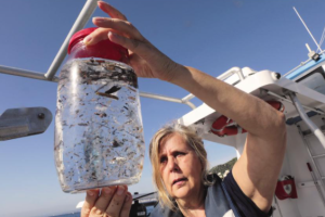 Celá polovina mikrovláken uvolněných z plastových tkanin doputovala do ekosystémů během posledních deseti let