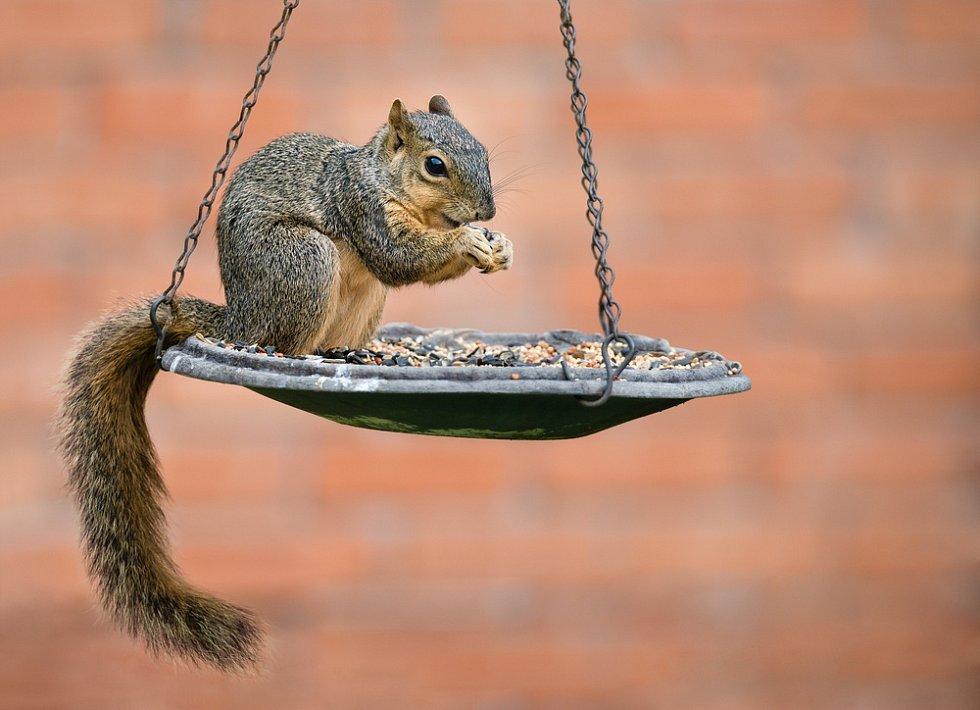 Krmítko občas přiláká i veverky
