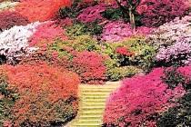 PALETA. Vybírat můžete z více než tisíce druhů rododendronů mnoha barev.