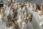 """Ostrov Taširodžima je po celém světě znám jako """"kočičí ostrov"""""""