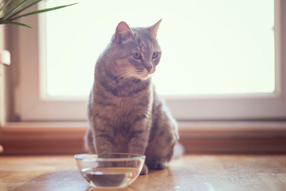 Kočkaby měla vypít asi 40 mililitrů vody denně na kilogram hmotnosti.