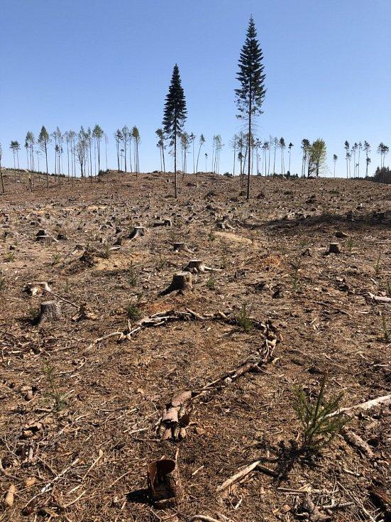 Zničené lesy u Zvůle.