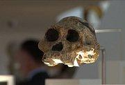 Zřejmě nejstarší lebeční úlomek druhu Homo sapiens byl nalezen vedle lebky neandrtálce