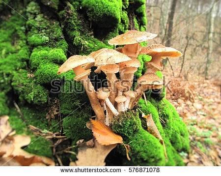 Sběr hub, ilustrační foto