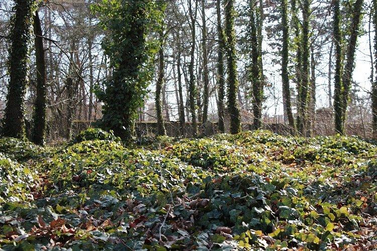 Během let oficiálního provozu hřbitova zde bylo na ploše 2,5 hektaru pohřbeno ve třech vrstvách 4300 osob.
