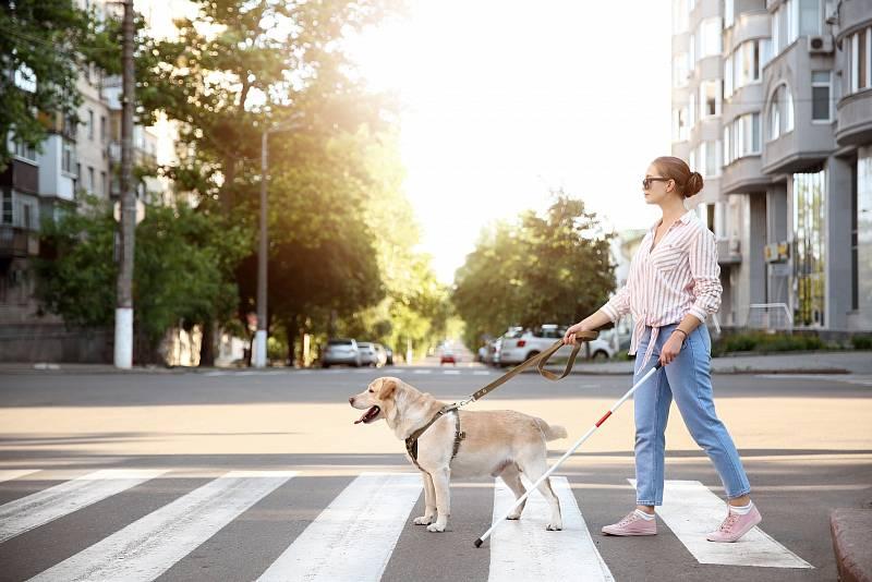 Nevidomým pomáhají v životě asistenční psi.