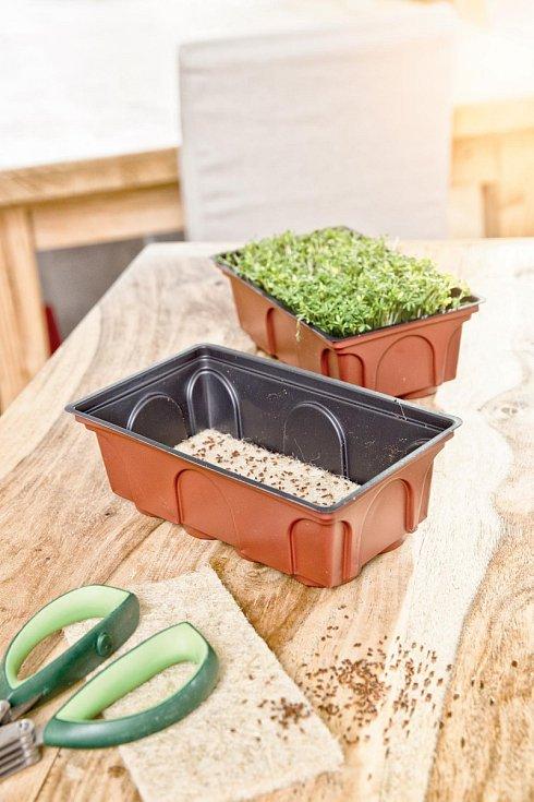Dobrým pomocníkem při pěstování zeleniny je výsevní skleníček