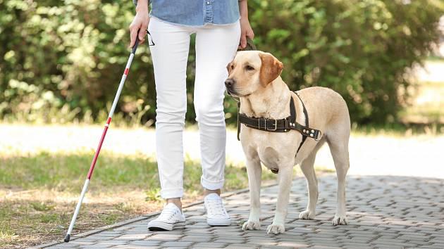 Asistenční pes. Ilustrační snímek