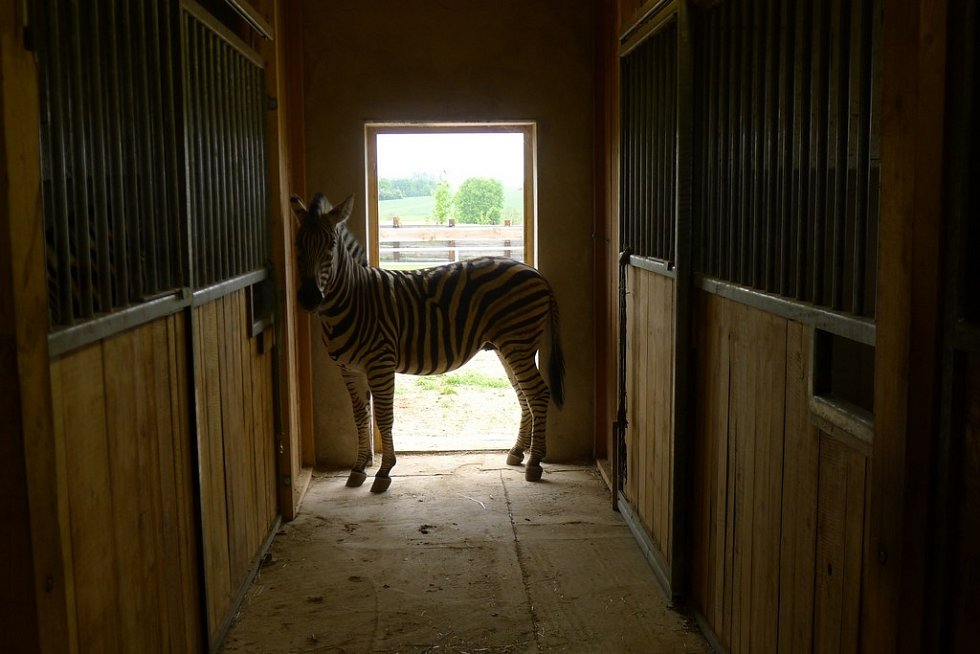 Aby zvířata nikdo neobtěžoval, není Farma Buk přístupná veřejnosti.