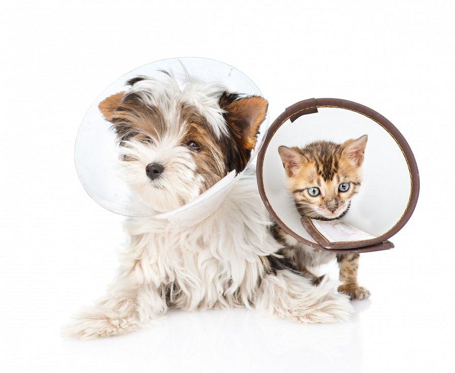 Kočičí a psí pacient.