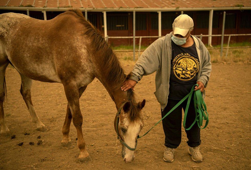 Muž s koněm na farmě v Ridgefieldu, kde jsou ustájeni koně z oblastí ohrožených požáry.