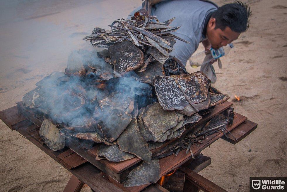 Výrobky ze želvoviny i nezpracované pláty připravené k pálení
