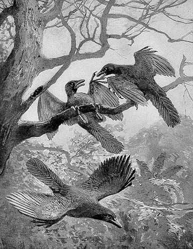 Další z rekonstrukcí archeopteryxe z díla Heinricha Hardera, publikovaná v roce 1906 v Die Gartenlaube