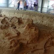Objevený dinosaurus dostal jméno ling-wu-lung šen-čchi