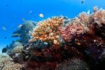 Korálový útes v Palau
